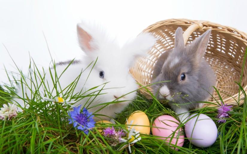 other-easter-bunnies-flowers-rabbits-grass-eggs-basket-kroliczki-koszyk-jajka-kwiatki-wielkanoc-best-wallpapers.jpg